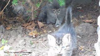 Котята дерзкий поход.Маленькие котята выходят на прогулку. Видео для Детей Funny Kittens.