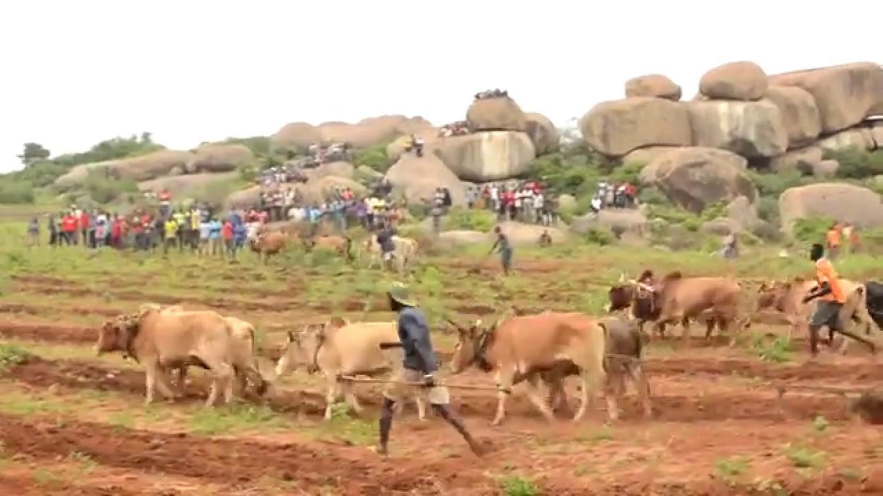 Download INAGA MLYAMBELELE AKISIMAMIA MASHINDANO YA KULIMA KWA NG'OMBE MKOANI SHINYANGA