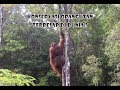 - Traveling to Tanjung Puting National Park   Central Borneo