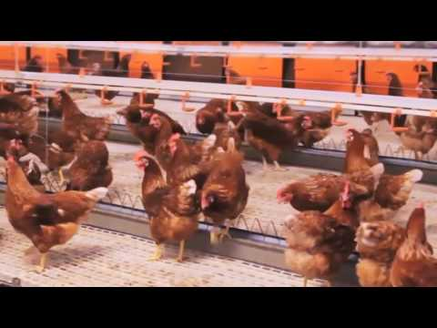 DTK Project – Large Egg Production Packing Center in Vietnam