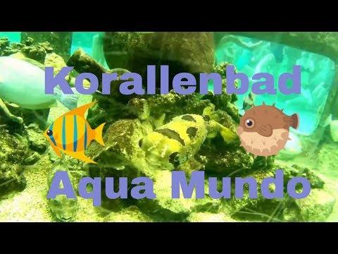 Korallenbäder in drei verschiedenen Aqua Mundo von CenterParcs