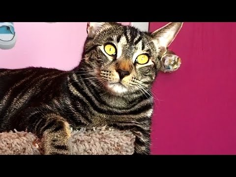 CUTE AND FUNNY CAT VIDEOS TO MAKE YOUR WEEK! 🐱
