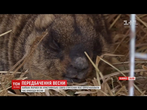 Львівський бабак напророчив ранню весну