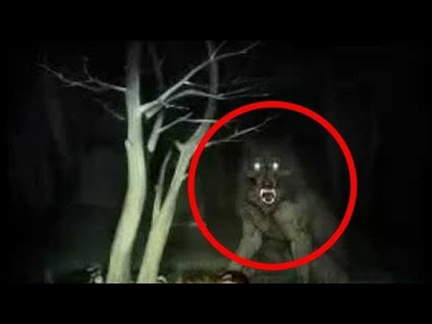 Download #5 werewolf caught on camera in real life