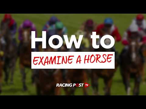 How To Examine A Horse