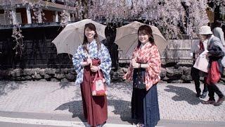 秋田 角館武家屋敷の桜