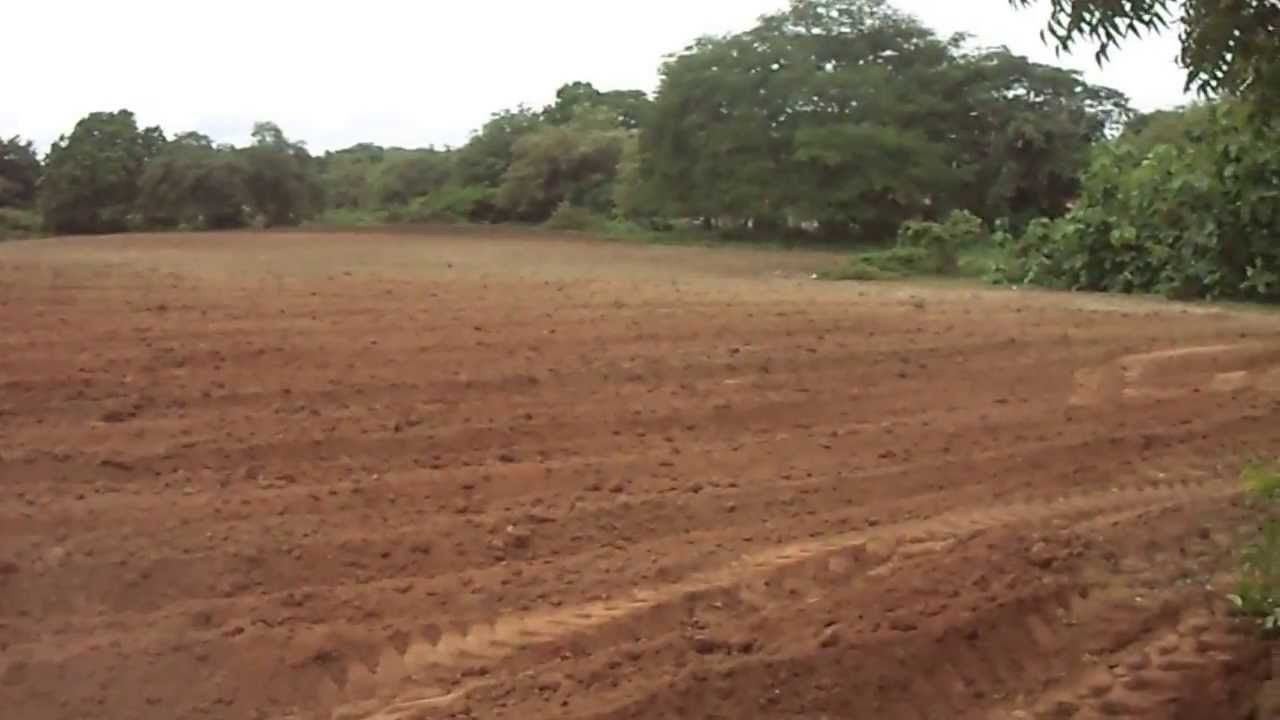 Terreno para sembrar yuca valencia youtube - Preparacion de la tierra para sembrar ...