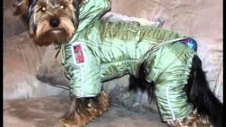 одежда для собак купить olx