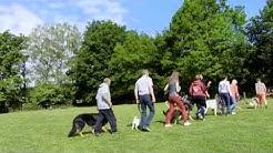 Gruppenarbeit auf dem Hundeplatz