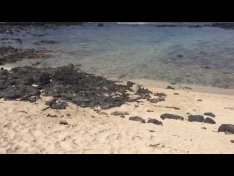 Baby monk seal in Hawaii