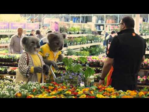 B&Q Let's Create (Koalas - Lily and Carl)