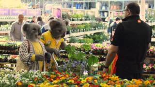 B&Q LET'S CREATE (KOALAS - LILY & CARL)