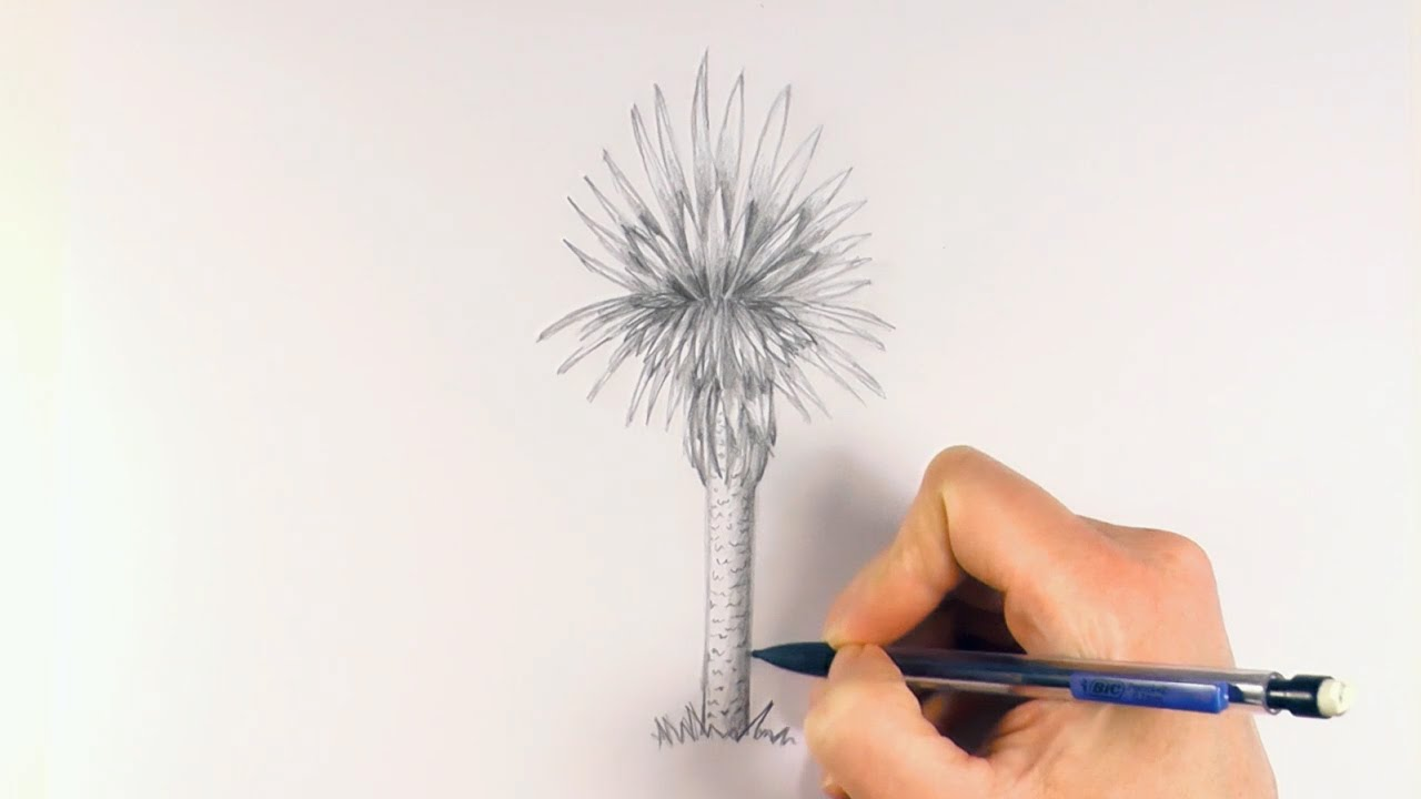 how to draw balga tree