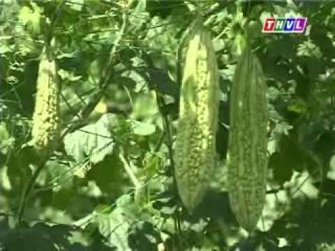 Nhanonglamgiau.com - Tổ hợp tác trồng màu, cùng nhau làm giàu