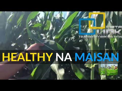 Instalink - Insta Organic Farm Enhanced Microbial Inoculant on CORN FARM