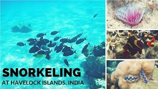 Elephant Beach Havelock Island Snorkeling