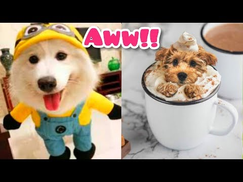 Funny Dogs | Funny And Cute Dog Videos | Funniest Dogs