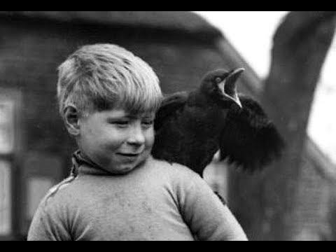 Heintje - Kommt ein vogel geflogen ( 1968 )
