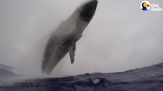 Whale Makes Huge Leap Out Of Ocean In Front Of Divers