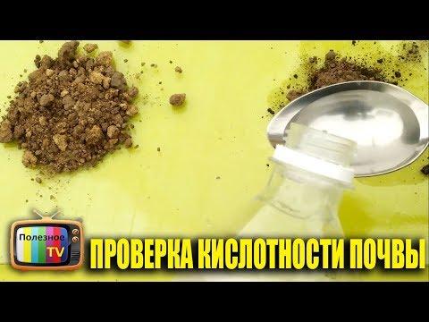 Как узнать кислотность почвы в домашних условиях