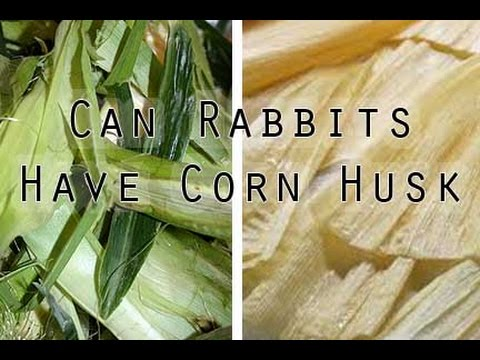 Is Corn Husk Safe For Rabbits