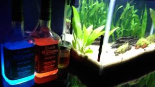 My Diy Co2 System For 10 Gallon Nursery Aquarium