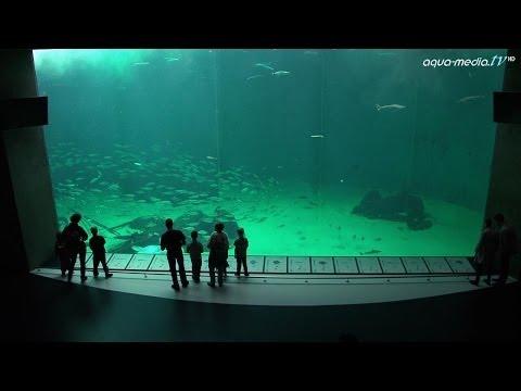 NORDSOEN-OCEANARIUM Hirtshals/Daenemark