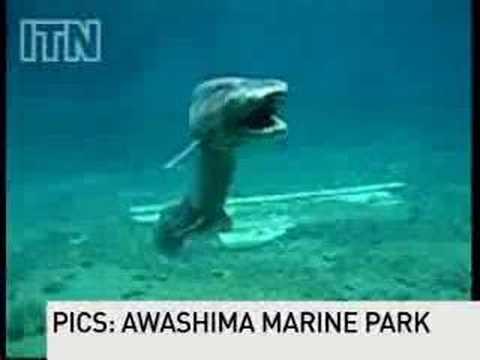 Prehistoric shark captured on film
