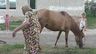 Лошади и Юлия Ивановна.