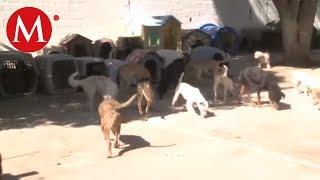 Al fin autorizan esterilizaciones a los animalistas