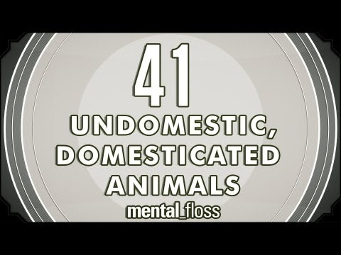 41 Undomestic, Domesticated Animals - mental_floss on YouTube (Ep.8)
