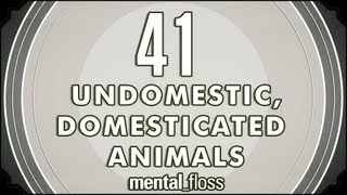 41 Undomestic, Domesticated Animals  mental_floss on YouTube (Ep.8)