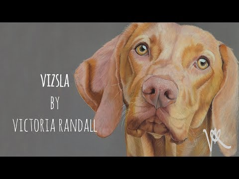Detailed Dog Portrait in Coloured Pencils | Vizsla