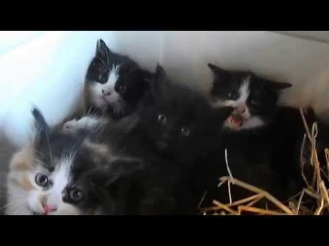 Little Spitfires - Feral Kittens