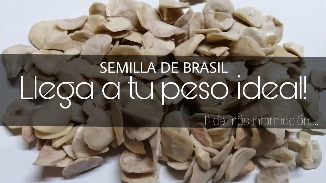 Alcohol semilla puedo de brasil tomar