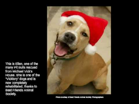 Smile | Dogs and Cats Smiling for Animal Rights