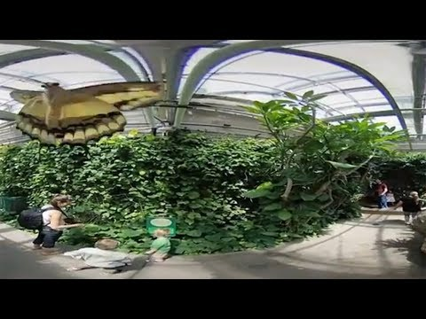Butterfly Pavilion 360°/VR in 4K