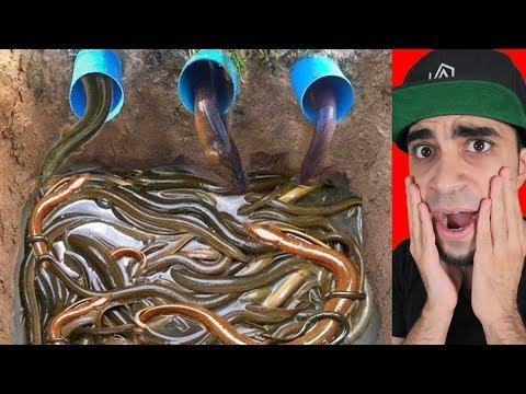 """فخ للثعابين و السمك مع بعض """" تحت الارض """""""