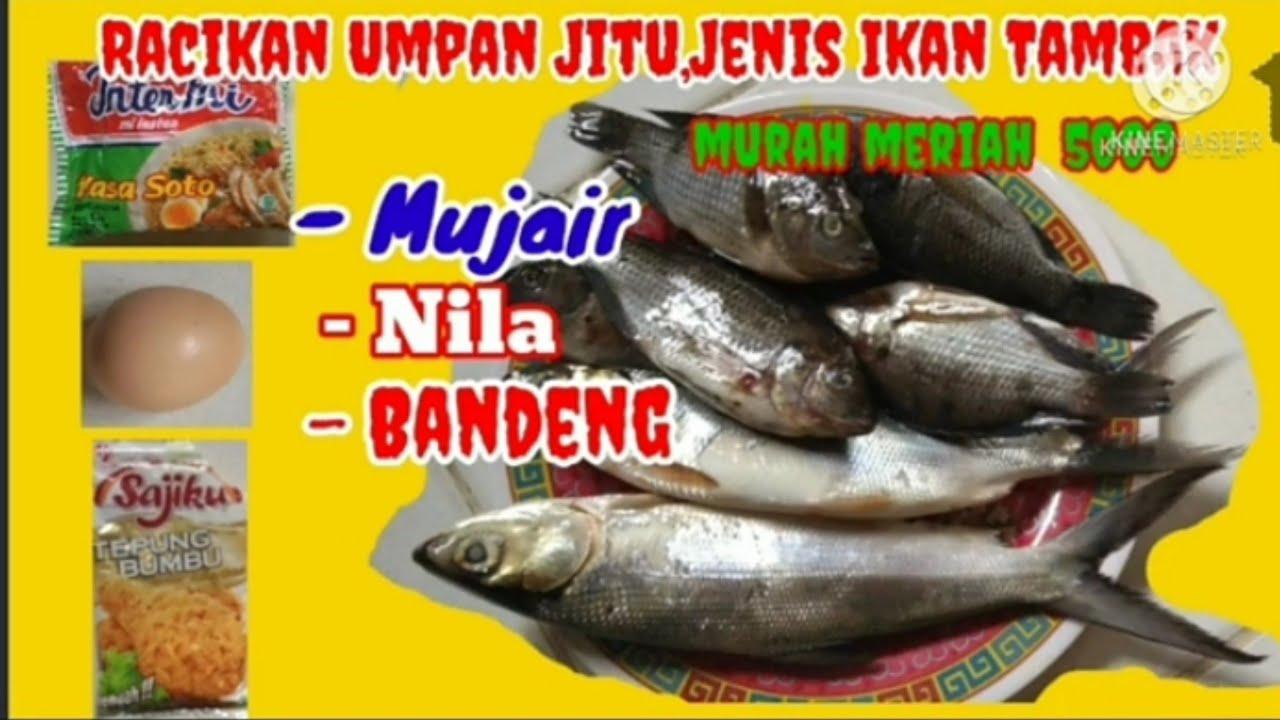 Download Racikan Umpan Jitu, Ikan Tambak Mujair,Nila dan Bandeng,Murah Meriah.