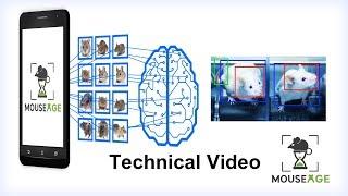MouseAGE: визуальные биомаркеры возраста мыши: технология   Lifespan.io