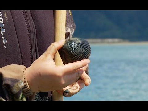 Grant's Getaways:  Tillamook Bay Clamming and Recipes