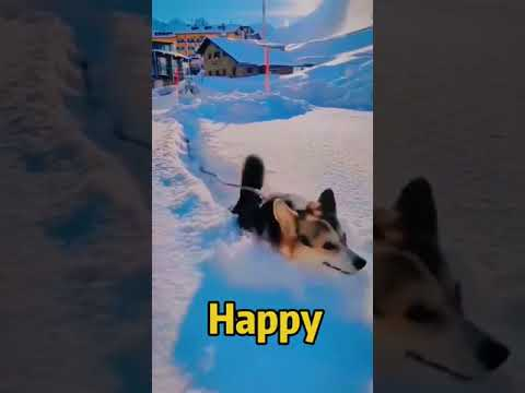 Download 🤣 Funniest 🐶 Dogs and 😻 Cats - Awesome Funny Pet Animals Life Videos 😇
