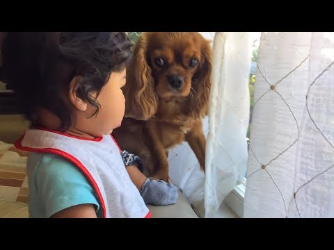 Cavalier King Charles Spaniel & baby are best friends.