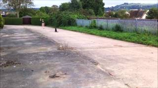 Pro Dog Uk: Grey Obedience (new)