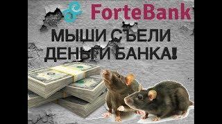 МЫШИ ЕДЯТ ДЕНЬГИ БАНКА! MICE EAT MONEY IN THE BANK!