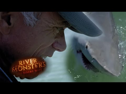 Jeremy Wade Struggles With a Bull Shark  - River Monsters