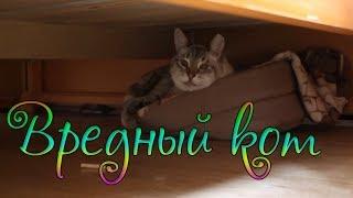ВЛОГ: Война с котом / Покупки в Утконосе