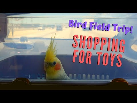 Bird Field Trip! | Shopping For New Bird Toys