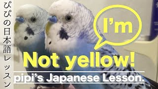 pipi's Japanese Lesson #1. ピピの日本語レッスン動画です! What does...
