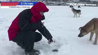 Рыбалка на окуня в заливе р Волга у лодочной станции Глухозимье на реке 2021